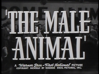 The male animal trailer title